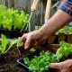 #SantaRosa: Se estarán entregando las semillas del programa «Cosechando para la familia»