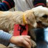 VGB: Castracion de mascotas 🐕🐈