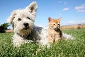 perro-gato-mascotas-getty_MUJIMA20140430_0001_29