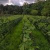 Bodega «Las Cañitas» presenta su propuesta de vino en lata